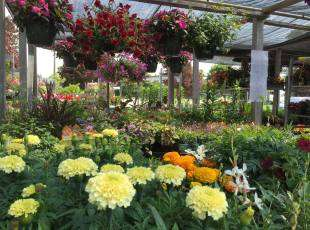 Gardens, Nurseries & Landscaping